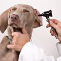 /home/lecreumo/public html/wp content/uploads/2015/08/dog at vet