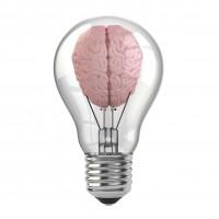/home/lecreumo/public html/wp content/uploads/2015/11/brain on print sm
