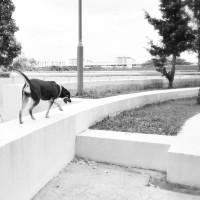 /home/lecreumo/public html/wp content/uploads/2016/01/dog off leash