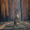 /home/lecreumo/public html/wp content/uploads/2019/11/kangourou