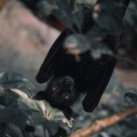 /home/lecreumo/public html/wp content/uploads/2020/04/bat